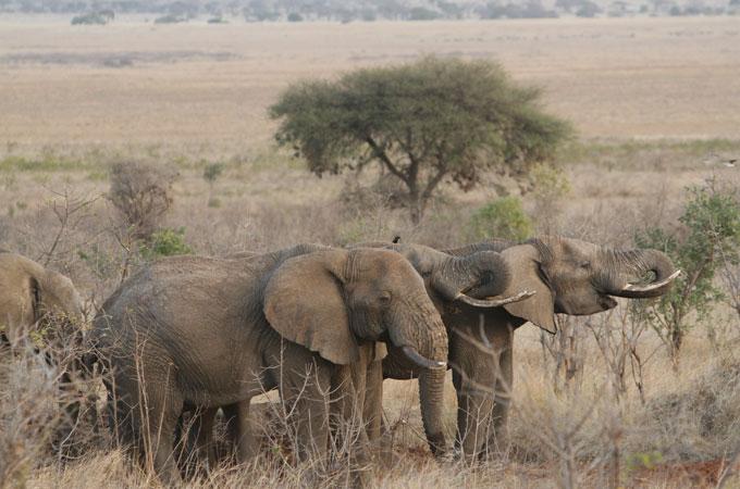 img_9822-elephant